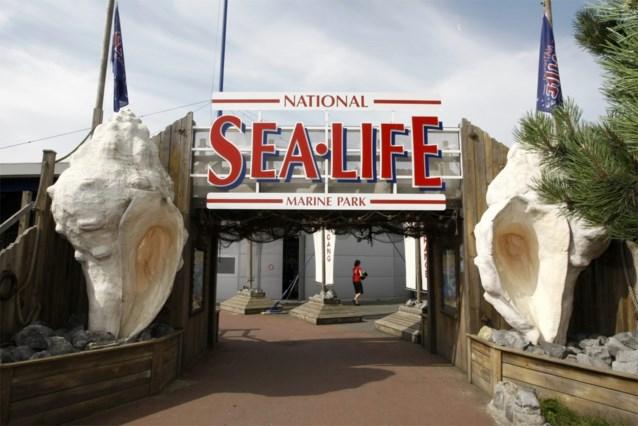 Sea Life nuanceert berichten over zeehonden die mensen aanvallen