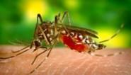 Tropisch Instituut onderzoekt 23 plaatsen in België op zoek naar dodelijke zika-muggen