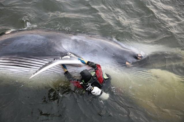 Walvis zwemt haven van Marseille in