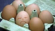 """Voedingsfederatie waarschuwt: """"Duurdere eieren door fipronilcrisis bedreigen leefbaarheid voedingsbedrijven"""""""
