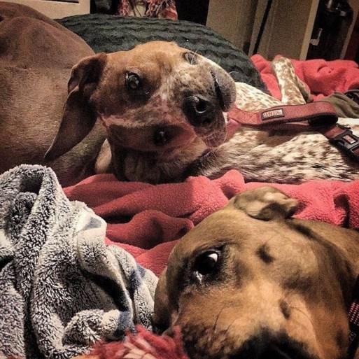De foto van deze hond heeft al meerdere mensen hoofdpijn bezorgd. Of een hernia