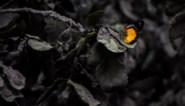 Bali bedekt met zwart deken van vulkanische as