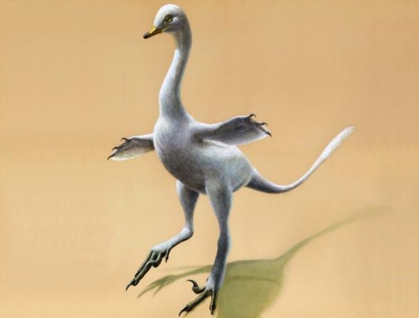 """Hier komt de """"zwanosaurus"""", Belgen ontdekken nieuwe zwemmende dino"""
