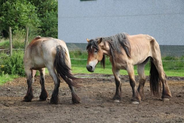 Paardenpunt Vlaanderen bereikt akkoord met GAIA over databank met gratis paarden
