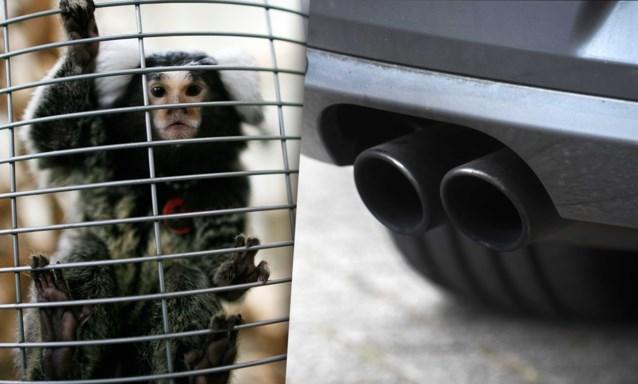 Volkswagen liet apen uitlaatgassen inademen tijdens experiment en verontschuldigt zich nu