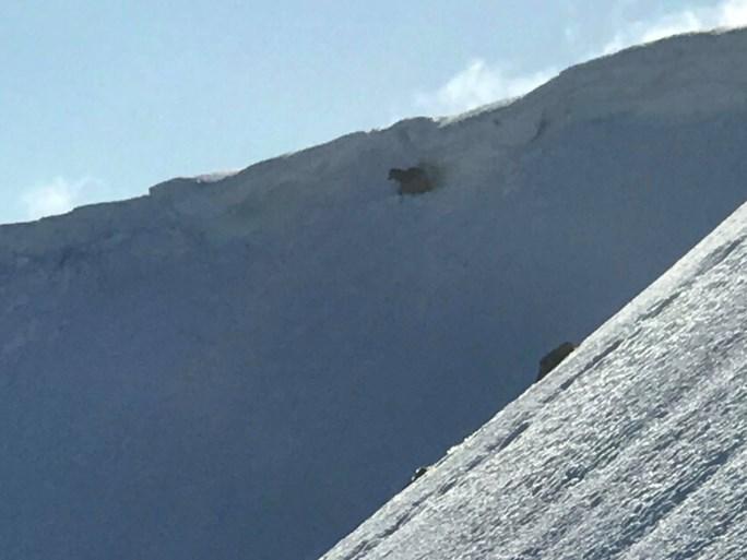 Klimmer ziet dat twee honden vastzitten op berg. En dan begint de race tegen de klok