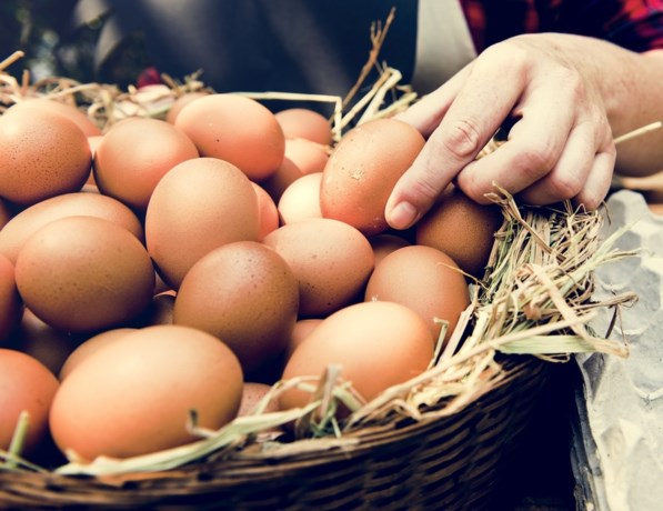 Wat met bevroren eitjes in het kippenhok: weggooien of opeten?