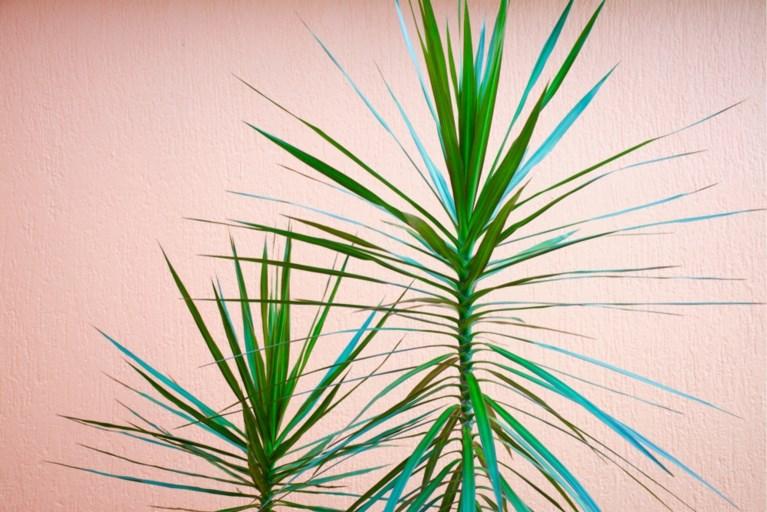 Deze hippe kamerplanten zijn giftig voor je huisdier