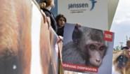 Europees Parlement wil wereldwijd verbod op dierproeven voor cosmetica
