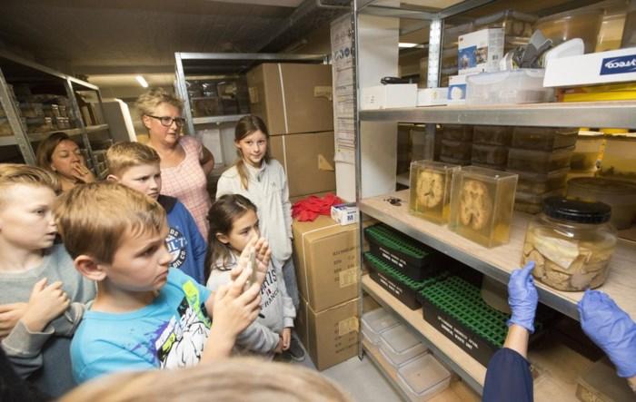 """Kinderen bezoeken unieke collectie hersenen in Duffelse kelder: """"Later mogen ze mijn hersenen hebben"""""""