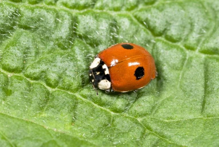 Het gaat niet goed met deze insecten: aantal beestjes neemt in razendsnel tempo af