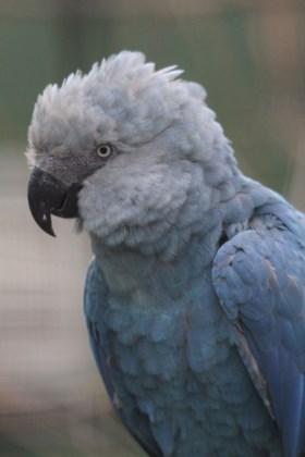 Pairi Daiza ontvangt uitgestorven diersoort