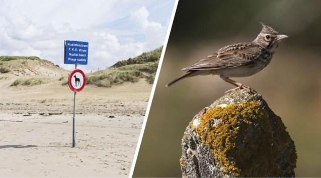 """Geen tweede naaktstrand omdat """"nevenactiviteiten in de duinen"""" zeldzaam vogeltje zouden storen"""