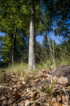 Herfsttaferelen bij 28 graden: bladeren vallen nu al van de bomen
