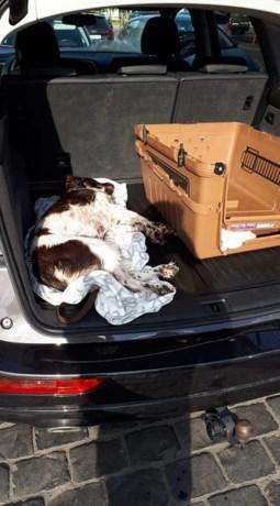 Hond sterft na uur vast te zitten in snikhete koffer, baasje maakt zich uit de voeten