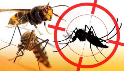 Monsterwespen, tijgermuggen, hoornaars: waar zitten ze in Vlaanderen en moeten we er bang voor zijn?