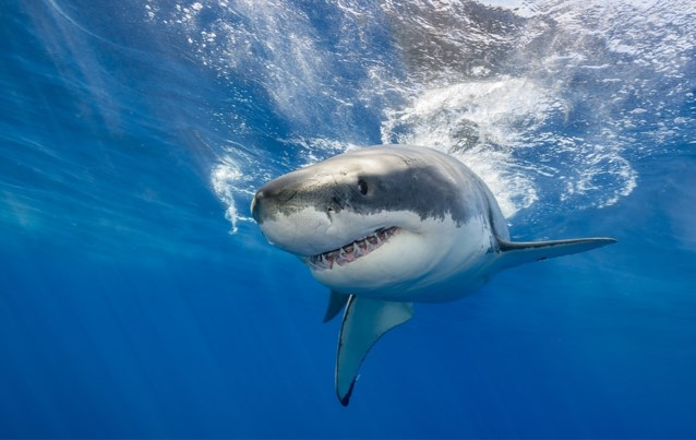 """""""Straks zwemmen haaien zoals die uit Jaws in de Noordzee"""""""