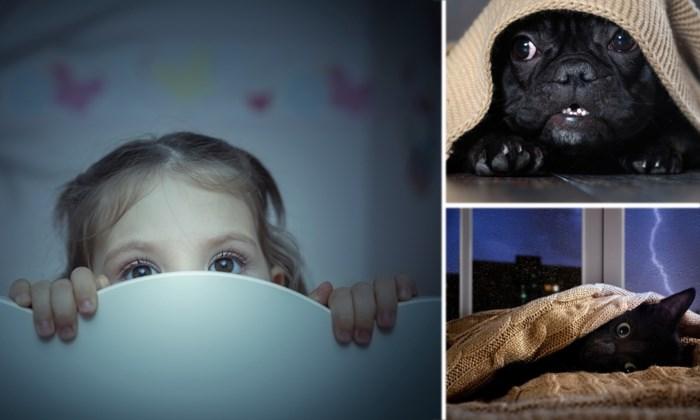"""""""Mama, ik ben bang!"""" Wat als je kind schrik heeft tijdens het onweer? En hoe ga je om met angstige huisdieren?"""