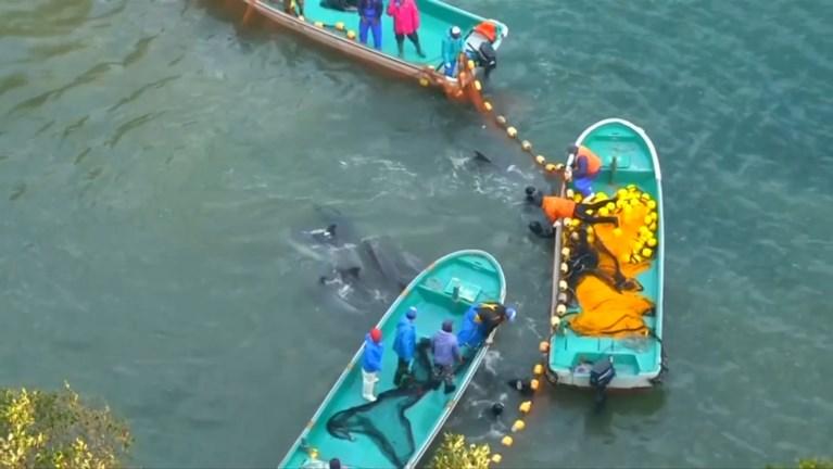 """Verlaten dolfijn kwijnt weg in verwaarloosde zoo: """"Ze is een symbool voor alle dieren in gevangenschap"""""""