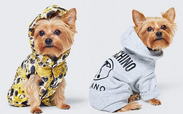 H&M en Moschino, nu ook voor huisdieren