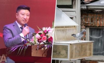 """Waarom een Chinese miljonair ons duivenerfgoed komt opkopen: """"Nog nooit zoiets meegemaakt"""""""