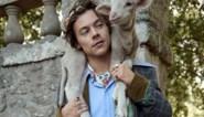 Harry Styles poseert voor Gucci, maar geitjes en biggetjes stelen de show