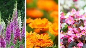 Boerenbloemen kweken: zo doet Bartel het