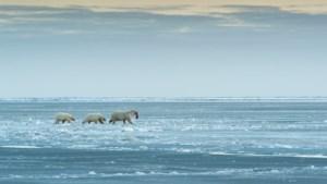 VS staat oliewinning op Noordpool toe