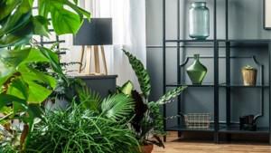 Planten houden niet van kou, maar ook niet van verwarming. Hoe help je ze dan wel de herfst en winter door?