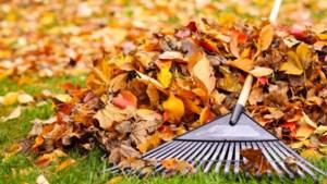 """Altijd al gedacht dat herfstbladeren slecht waren voor je gazon? """"Wees lui en laat ze liggen"""""""