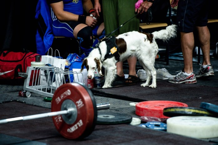 Nieuwe wapens in de dopingstrijd: Molly, de eerste antidopinghond