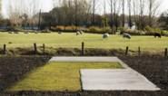 """Vlaams Bouwmeester wil ons landschap redden: """"We hebben het platteland vermoord"""""""