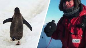 """Mochten filmmakers deze pinguïns redden? """"Het was hartverscheurend"""""""