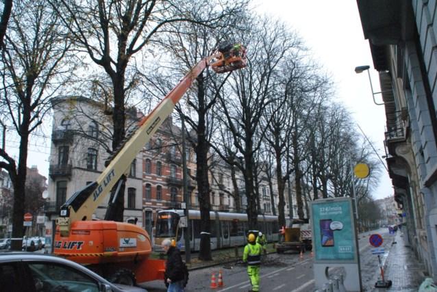 Protesterende buren moeten duimen leggen: kastanjebomen worden kopje kleiner gemaakt