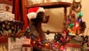 Je huisdier houdt niet van de feestdagen. Tips van de dierendokter om kat en hond rustig te houden