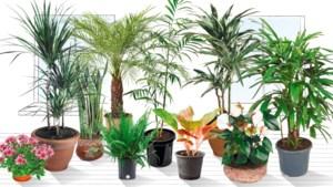 Helpen 'superplanten' de lucht te zuiveren in uw huiskamer?