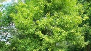 Vlaamse regering plant bomen genoemd naar Leopold ... voor het Afrikamuseum
