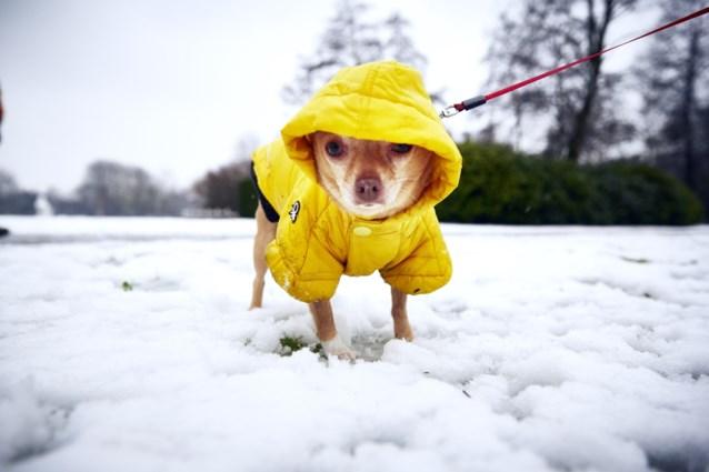 """Dierenverzorgers waarschuwen: """"Strooizout maakt uw hond ziek"""""""