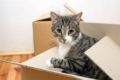 Hoe verhuis je een kat? Tips van de dierendokter