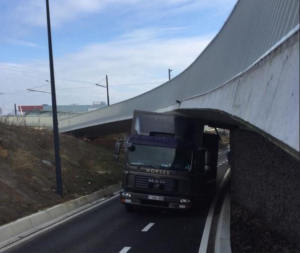 Vrachtwagen met paarden rijdt zich vast onder brug