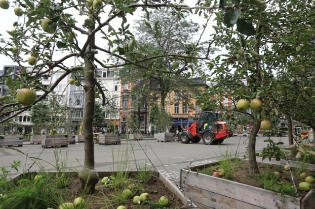 Sint-Baafskathedraal krijgt échte stadsboomgaard, met kersen en amandelen