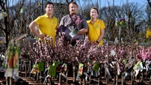 Siertuin maakt plaats voor eetbare tuin