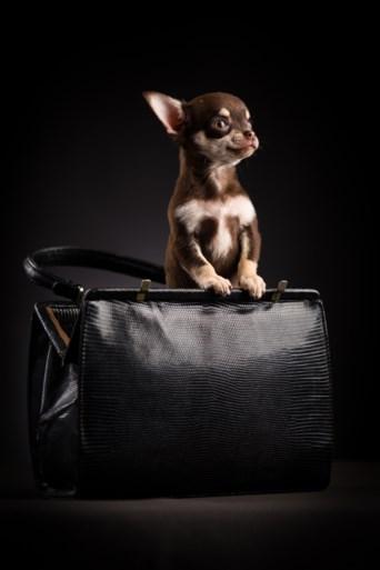 """De huisdierfotograaf, de nieuwe niche: """"Baasjes willen soms 500 euro neertellen voor een portret"""""""