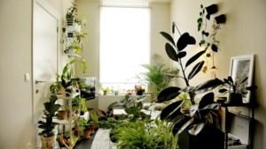 Dit is hét moment om je kamerplanten te verpotten: experts vertellen hoe je dat het best aanpakt