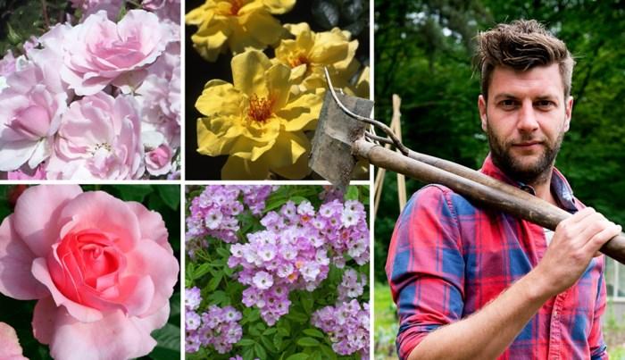 Het is nu het moment om je rozen te snoeien: groenman Bartel Van Riet legt uit hoe je dat het best doet