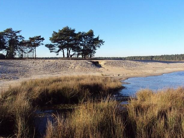 Brand legt drie hectare van Lommels natuurgebied in de as