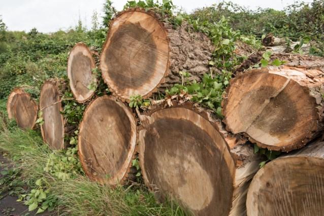 """Bosbouwer """"ongerust"""" over beschikbare voorraad eikenhout voor heropbouw Notre-Dame"""