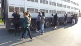 Dierenactivisten nemen afscheid van varkens in Ruiselede