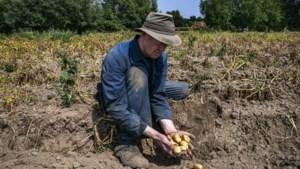 """Experts waarschuwen nu al voor historisch watertekort: """"Het is hopen op een kletsnatte zomer"""""""
