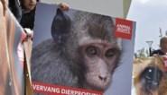 """Dierproeven verboden in België maar KU Leuven gebruikt achterpoortje: """"horrorpraktijken"""""""